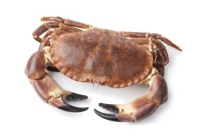 Brown crab