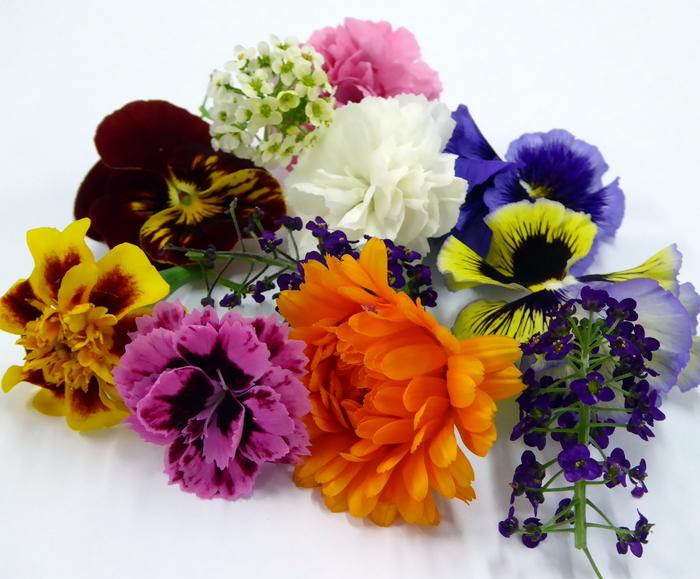 W700 flores