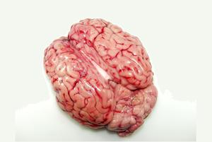 Calf brains